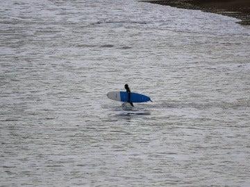 Un surfista, en Coldingham Bay