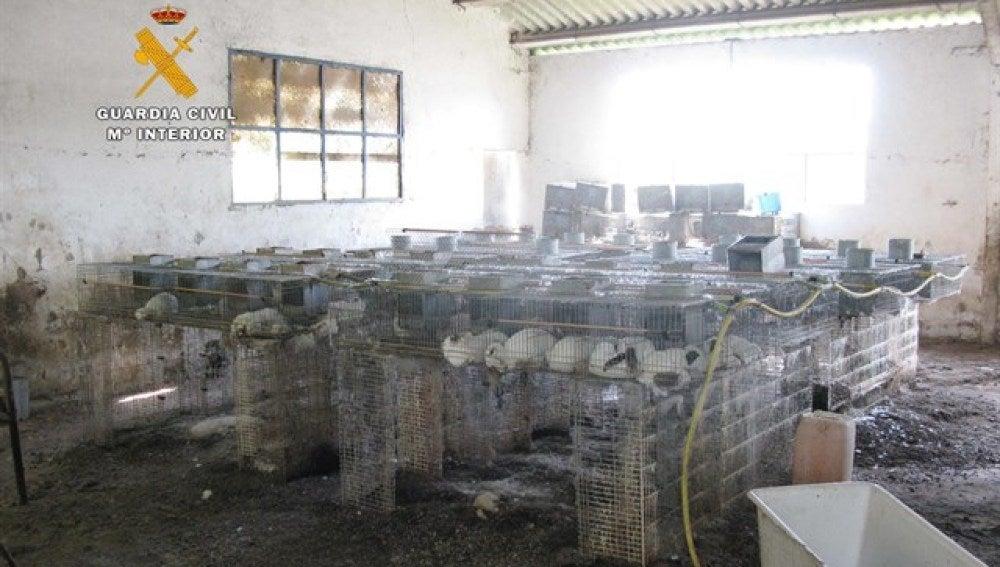 La nave en la que han encontrado un centenar de conejos muertos