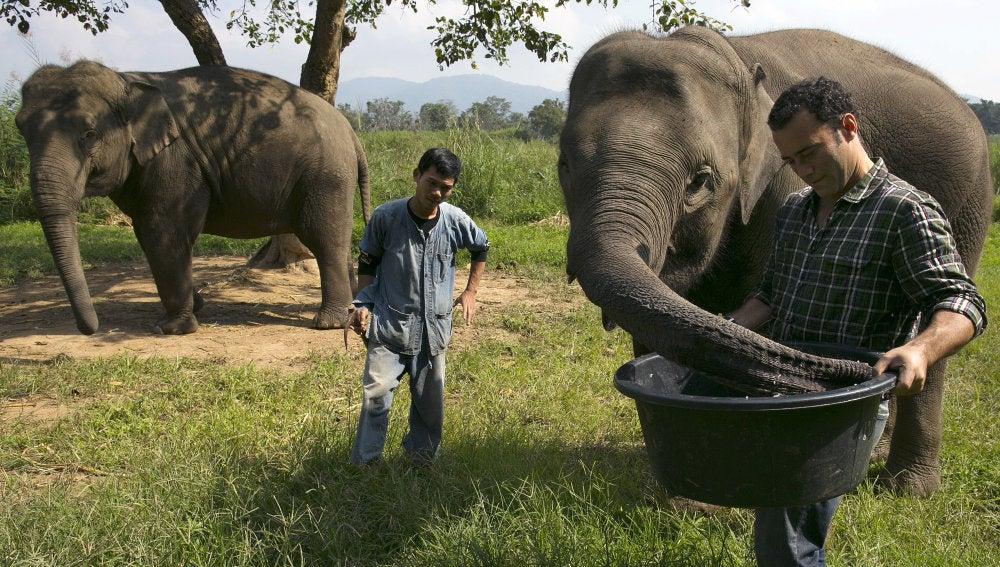 Los elefantes tienen el secreto del café más caro del mundo