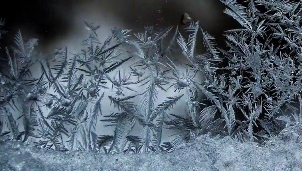 "Frame 58.457727 de: Macro ""time-lapse"": la manera de ver lo imposible"