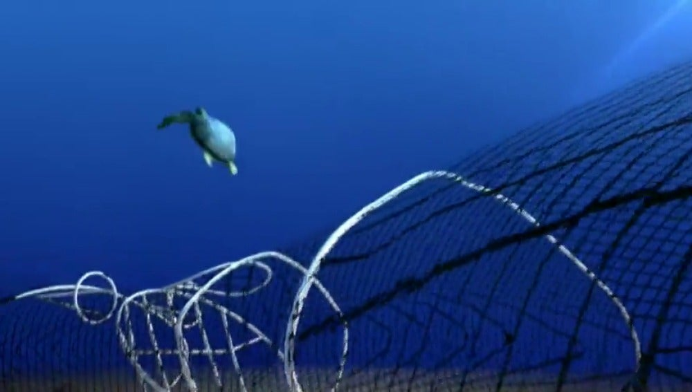 Frame 27.377777 de: México intentará reproducir en cautividad a la vaquita marina