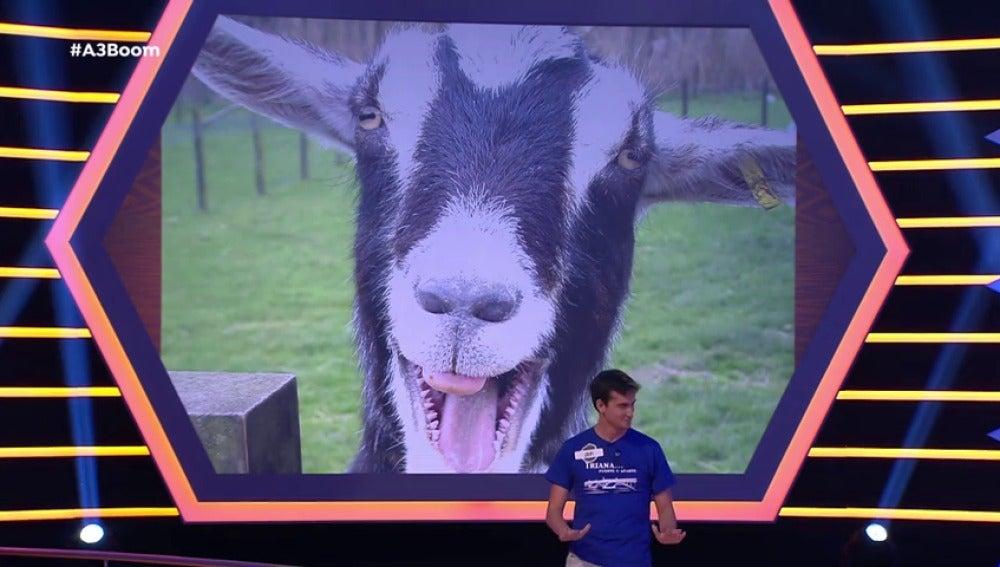 Frame 72.274285 de: Tener fobia a las cabras