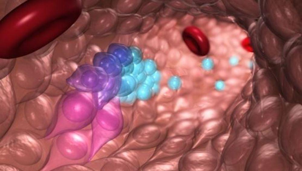 Una nueva tecnica permite crear celulas madre de la sangre en el laboratorio