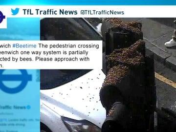 Frame 16.622222 de: Un enorme enjambre de abejas paraliza la actividad de un distrito londinense