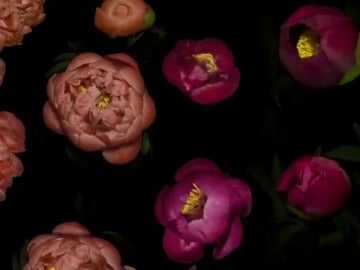 Frame 12.177777 de: Un vídeo grabado por el cineasta Jamie Scott reúne millones de fotografías de flores y plantas