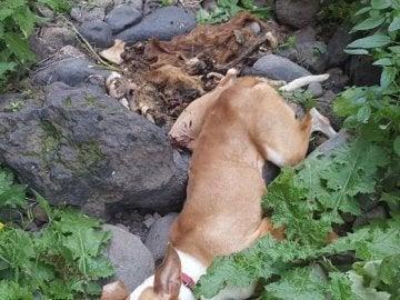 Cadáver de un perro arrojado por un acantilado
