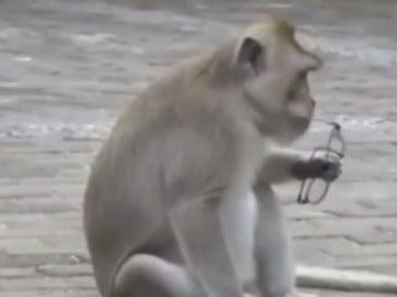Mono robando en Bali