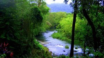 El bosque vuelve a su color verde gracias a la misión de la pareja