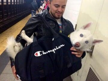 Un perro metido en una mochila en el Metro de Nueva York