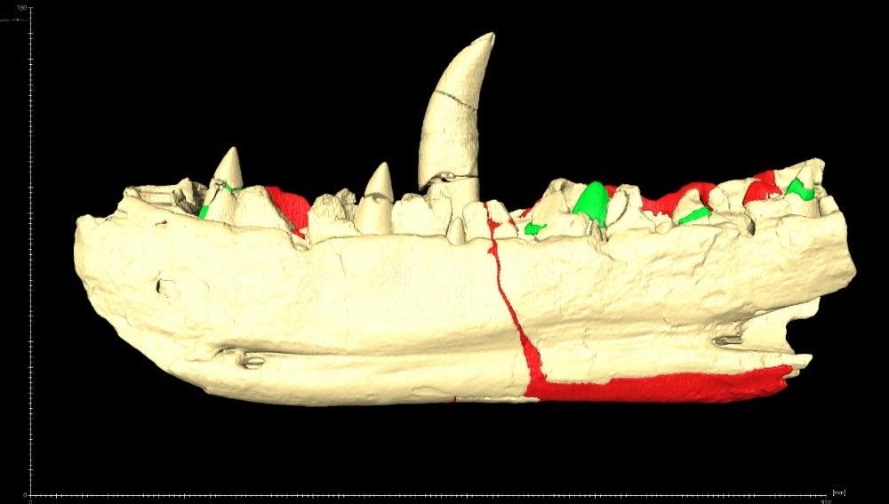 El primer dinosaurio del mundo muestra nuevos dientes gracias a una tecnología pionera