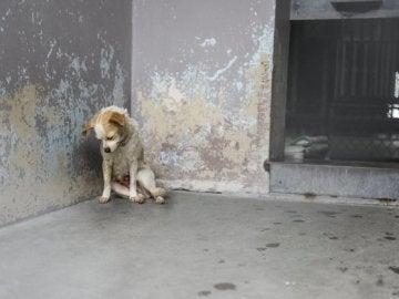 La perra estaba encorvada en una esquina y parecía deprimida