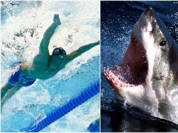 Michael Phelps, ante su mayor reto: una carrera contra un tiburón