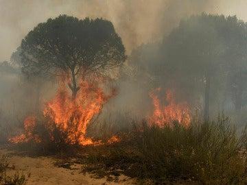 Arden los bosques de Moguer (25-06-2017)