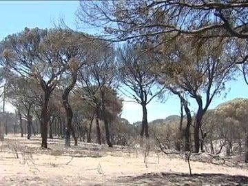 El entorno de Doñana tardará más de 40 años en recuperarse