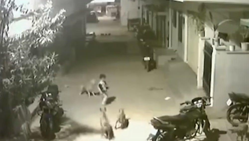 Un valiente niño planta cara a unos perros para salvar a su amiga