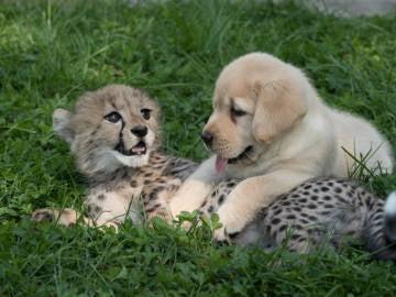 Emmett y Cullen comparten momentos en el zoológico