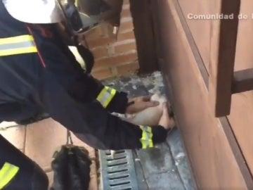 El bombero intentando sacar la cabeza del chihuahua