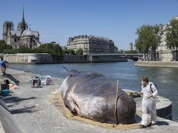 Cachalote creado para denunciar el cambio climático