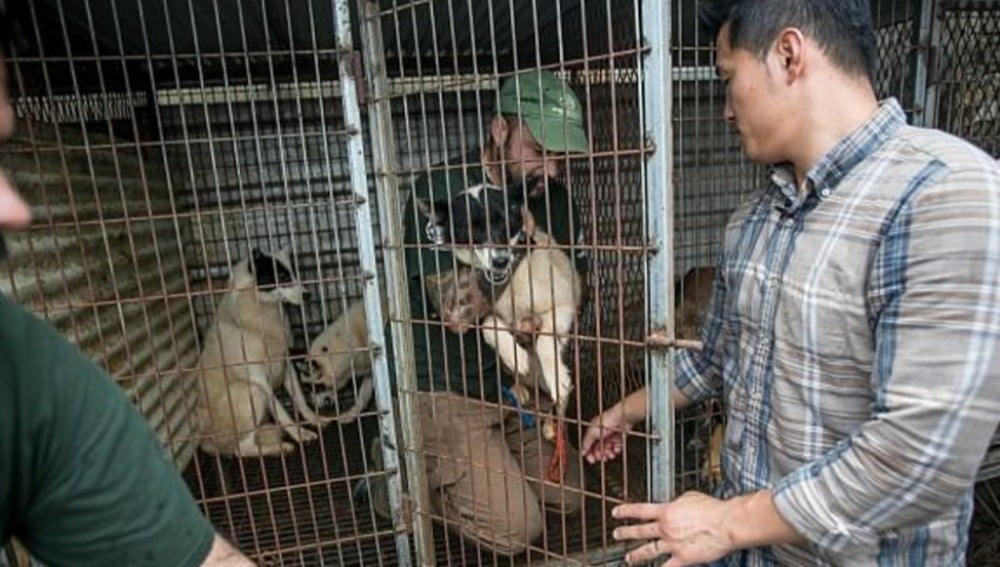 Granjas de perro Corea del Sur
