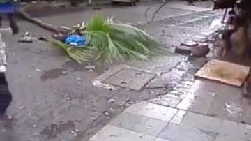 Momento en el que cae la palmera sobre Kanchan Nath