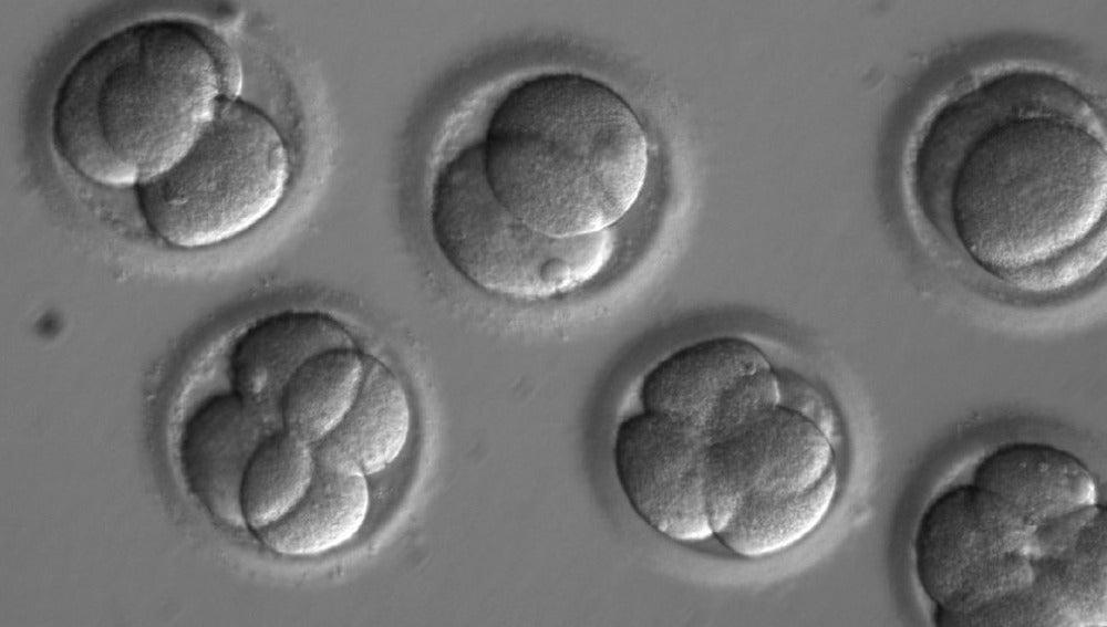 Reparan una mutación genética en embriones humanos de forma eficiente