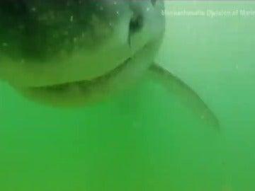 Así ataca un tiburón blanco
