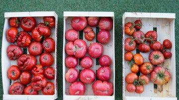 tomates_domezain