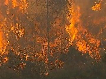 En Galicia, tres de cada cuatro incendios son intencionados