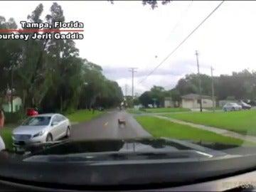 Un perro reacciona desesperadamente cuando su dueño le abandona sin escrúpulos en medio de la carretera