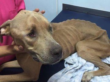 Rescatan a un perro  al que unos menores maltrataban