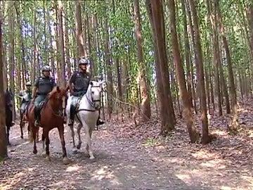 La Guardia Civil intensifica la vigilancia en el Camino de Santiago con patrullas a caballo