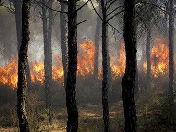 Incendio en Cartaya, Huelva