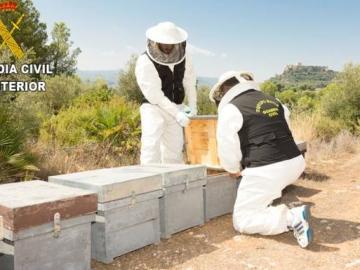 Un detenido y un investigado por envenenar 16 millones de abejas en Montesa