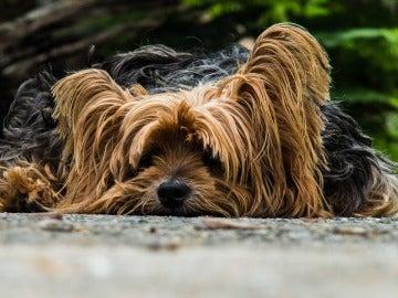 'Adopta un Perro', el comparador para adoptar animales en España