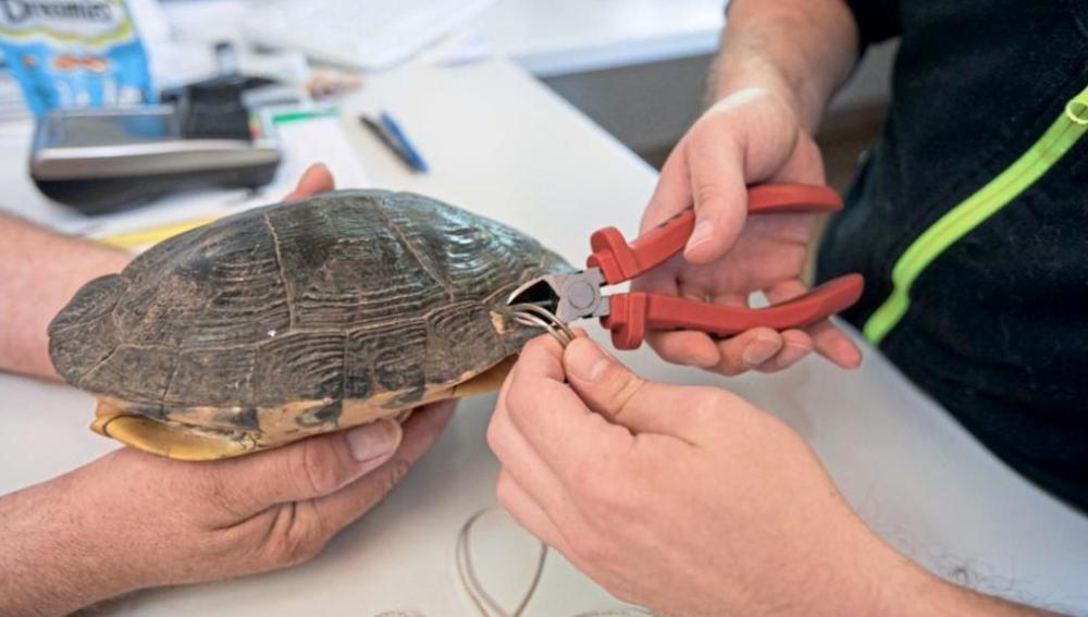 La tortuga maltratada