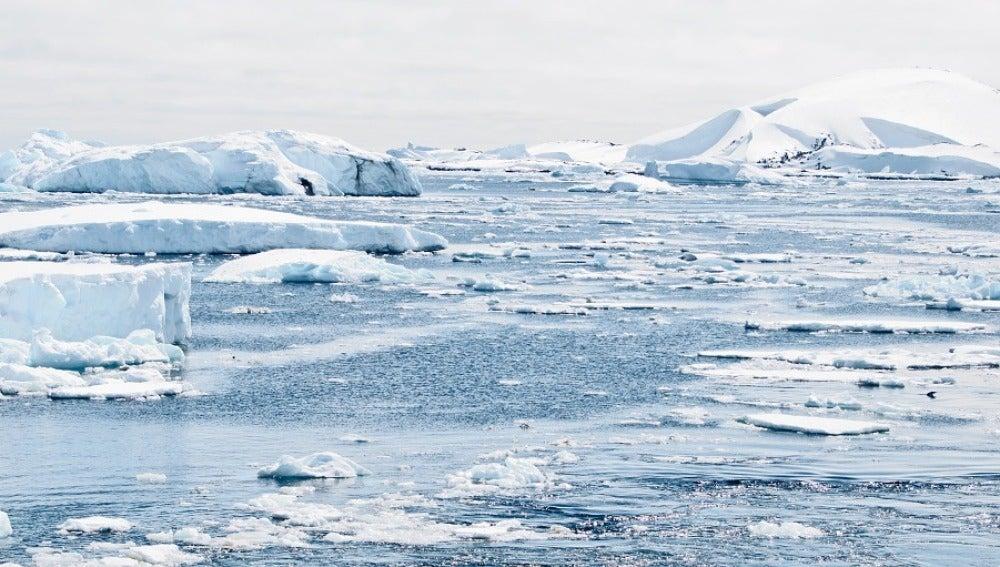 El 79% de las especies del océano austral se verán perjudicadas por el calentamiento global