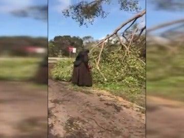 El vídeo de una monja cortando con una motosierra los árboles caídos tras el paso de Irma se vuelve viral
