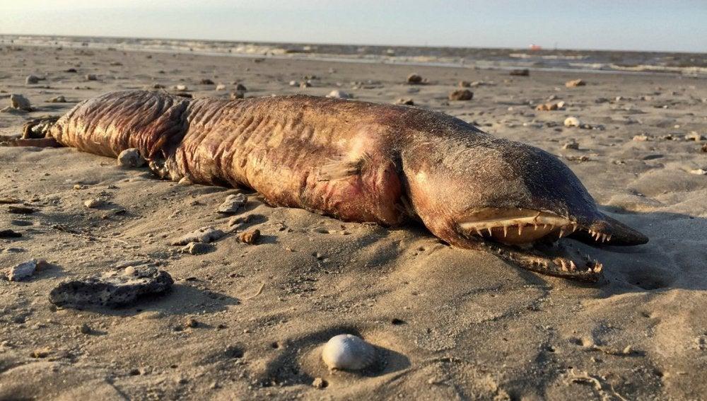 La misteriosa criatura en una playa de Texas