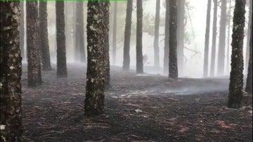 Bajo control el incendio de Gran Canaria