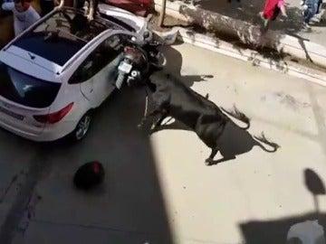 Un toro ensogado embiste una moto durante su recorrido por Lodosa