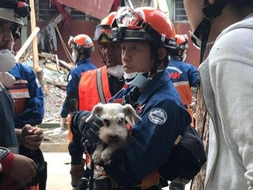 El perro rescatado entre las ruinas de los edificios derribados en México