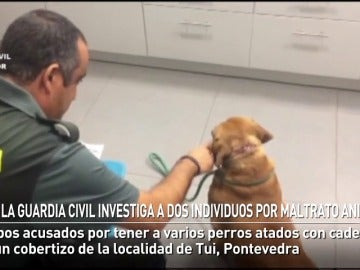 La Guardia Civil investiga a dos vecinos de Tui por maltrato animal