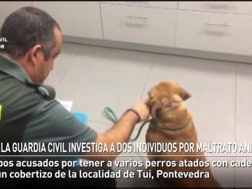La Guardia Civil investiga a dos vecinos de Tui por maltrato animal