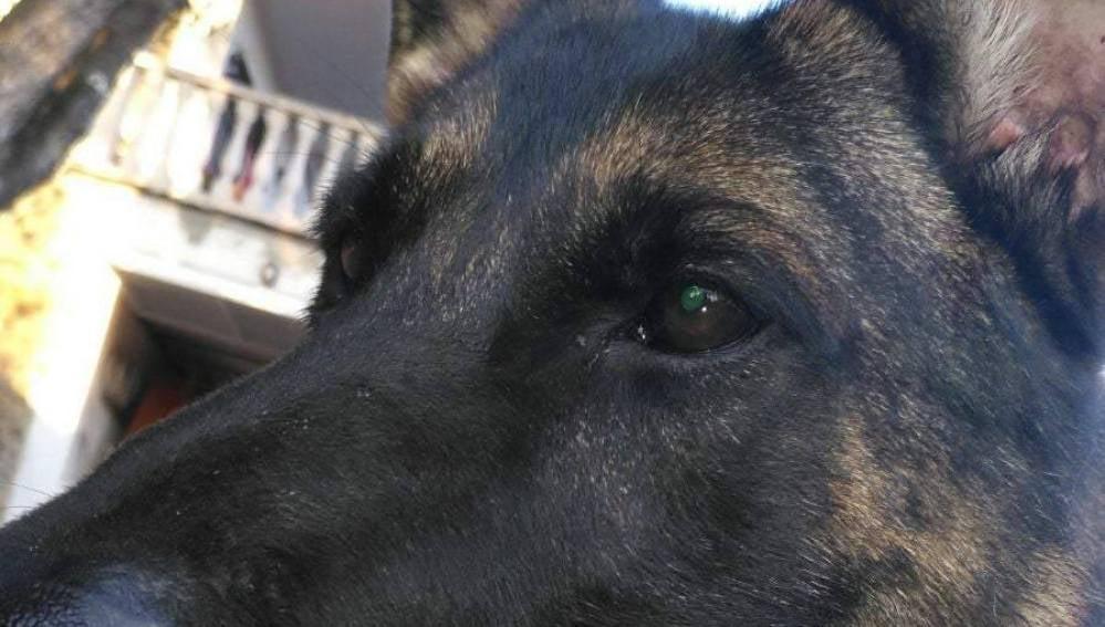El perro policía vetado en un acto