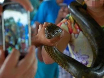 Turistas sujetando a una serpiente para hacer una foto