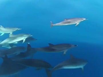 Turistas sorprendidos por una manada de delfines a poca distancia de la costa