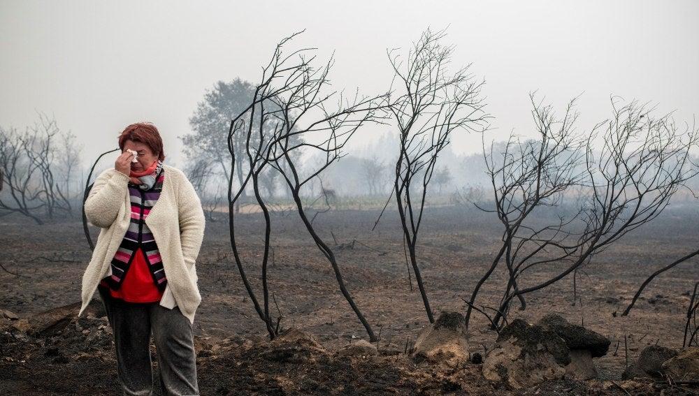Consecuencias de los incendios en Galicia