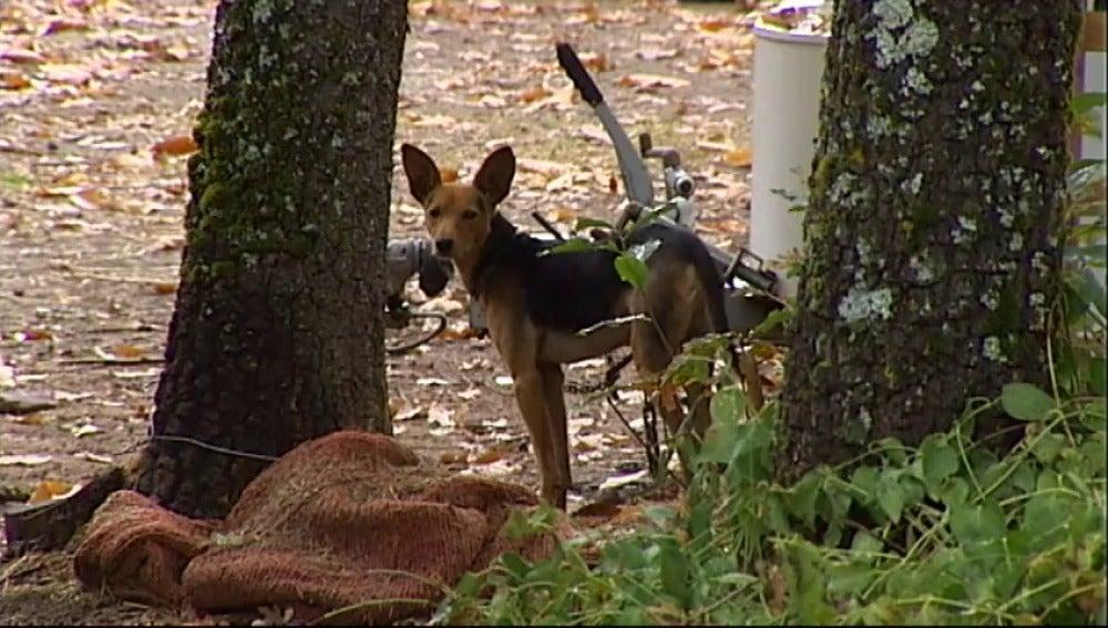 Encuentran arropada por su perro a una niña de 2 años tras nueve horas desaparecida en Ávila