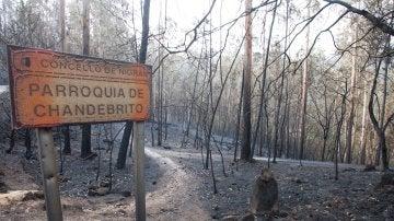 La carta de desesperación de un policía que trabajó en el incendio de Galicia