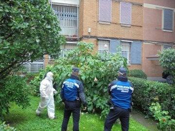 Imagen de la policía retirando las plantas